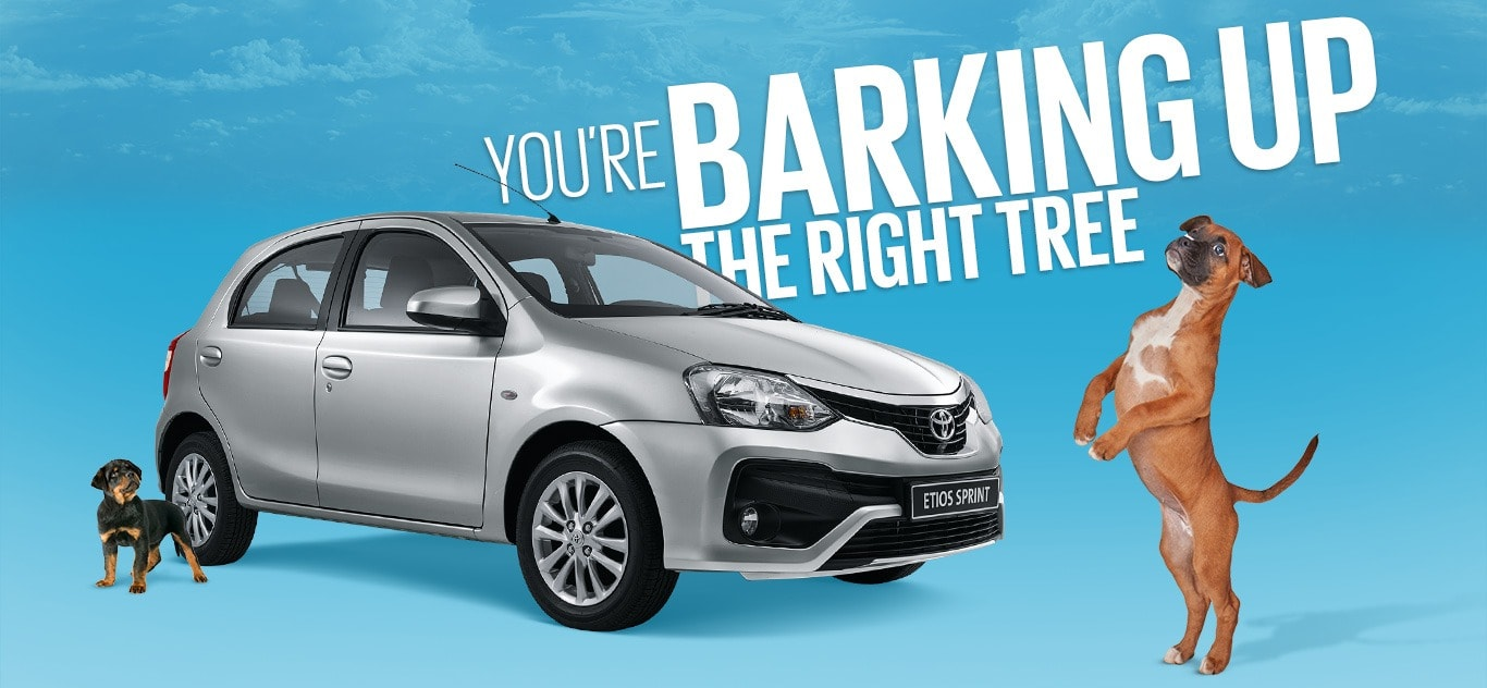 Etios Spring - You're barking up the right tree